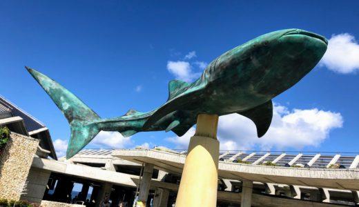 12月の沖縄本島 その2 美ら海からブセナへ魚鑑賞周遊