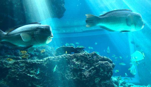12月の沖縄本島 その1 のんびり観光もいいものです